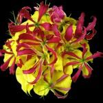 bouquet 0197